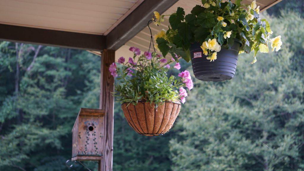 tanaman hias gantung begonia - rumah123.com