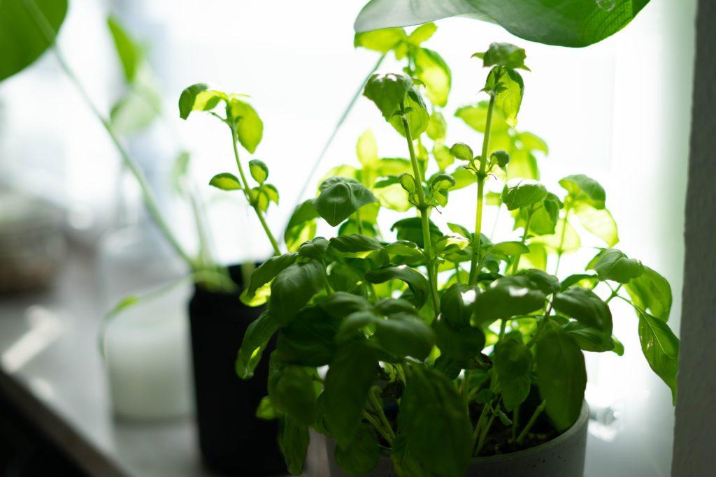 tanaman obat - rumah123.com