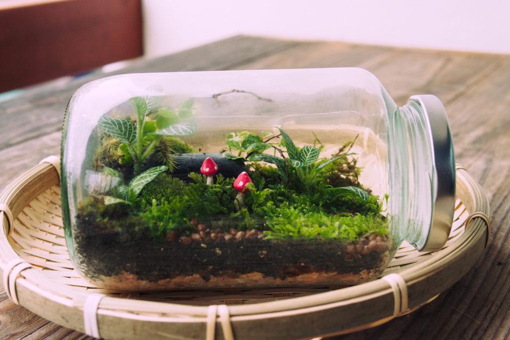 Buat sendiri terrarium milikmu menggunakan toples bekas - Rumah123.com