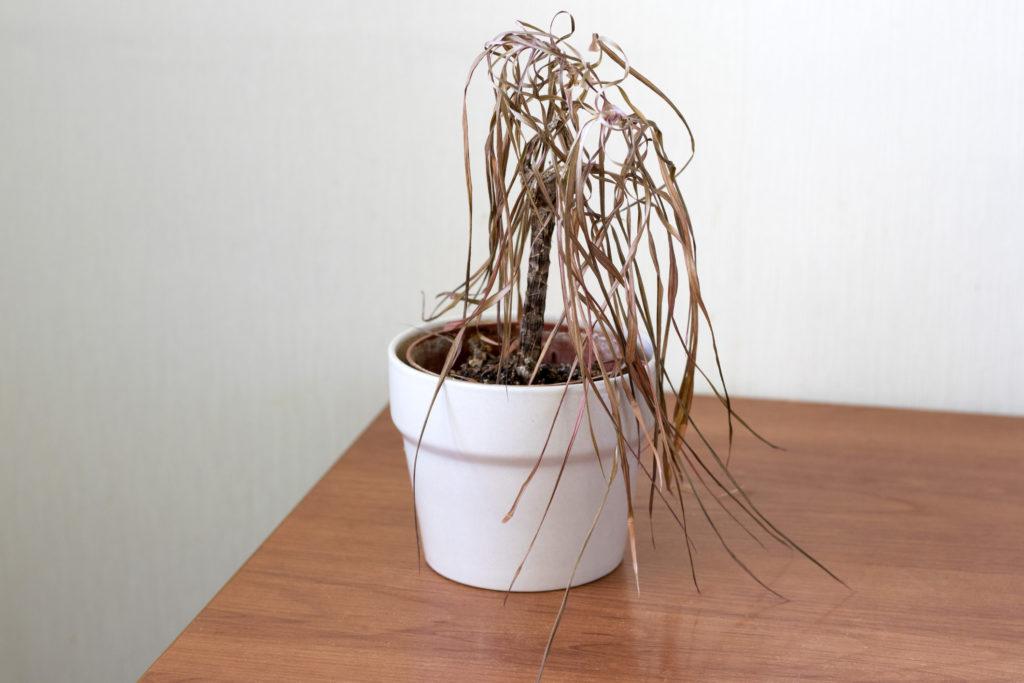 Tanaman busuk merupakan salah satu pembawa sial di rumah - Rumah123.com