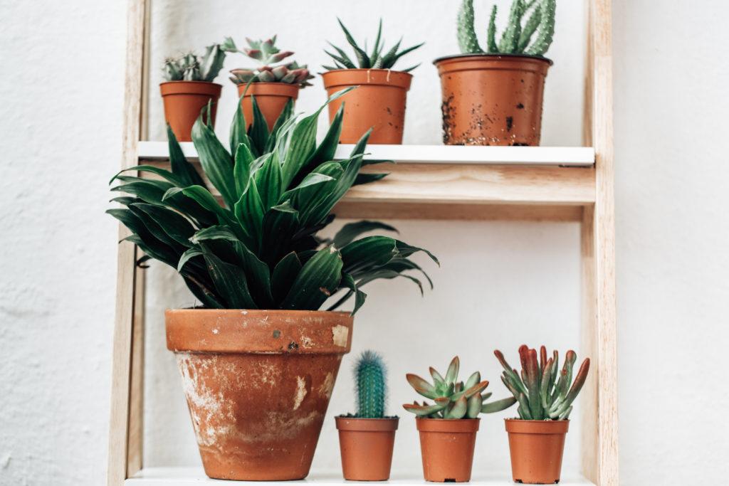 Ada ha-hal dasar uanh harus diketahui dalam membuat indoor garden - Rumah123.com