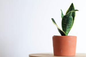 10 Tanaman Indoor untuk Dekorasi yang Minim Perawatan