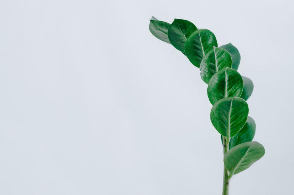 Tanaman indoor asal Afrika ini bisa juga dijadikan tanaman obat - Rumah123.com
