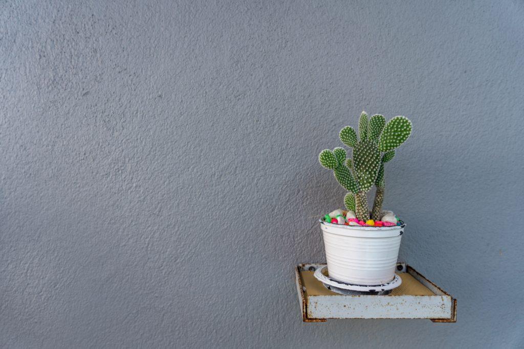 Tanaman indoor kaktus banyak dijadikan kado dan souvenir acara-acara - Rumah123.com