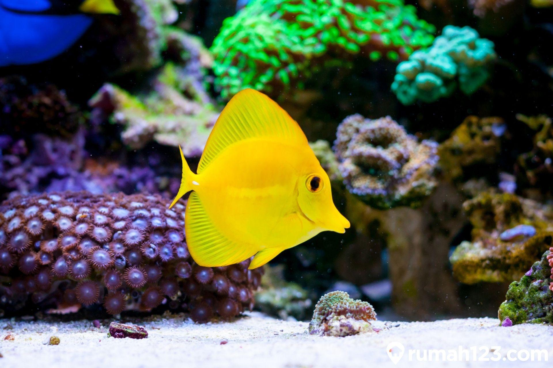 9 Jenis Ikan Hias Air Laut yang Mudah Dipelihara Pemula