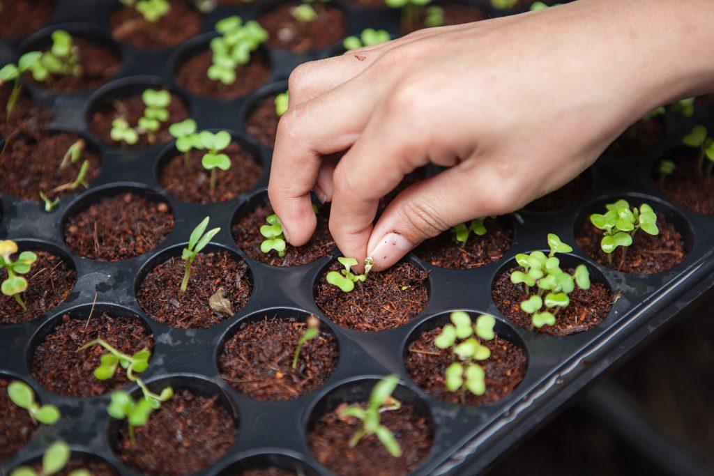 Urban farming, konsep berkebun untuk orang perkotaan - Rumah123.com