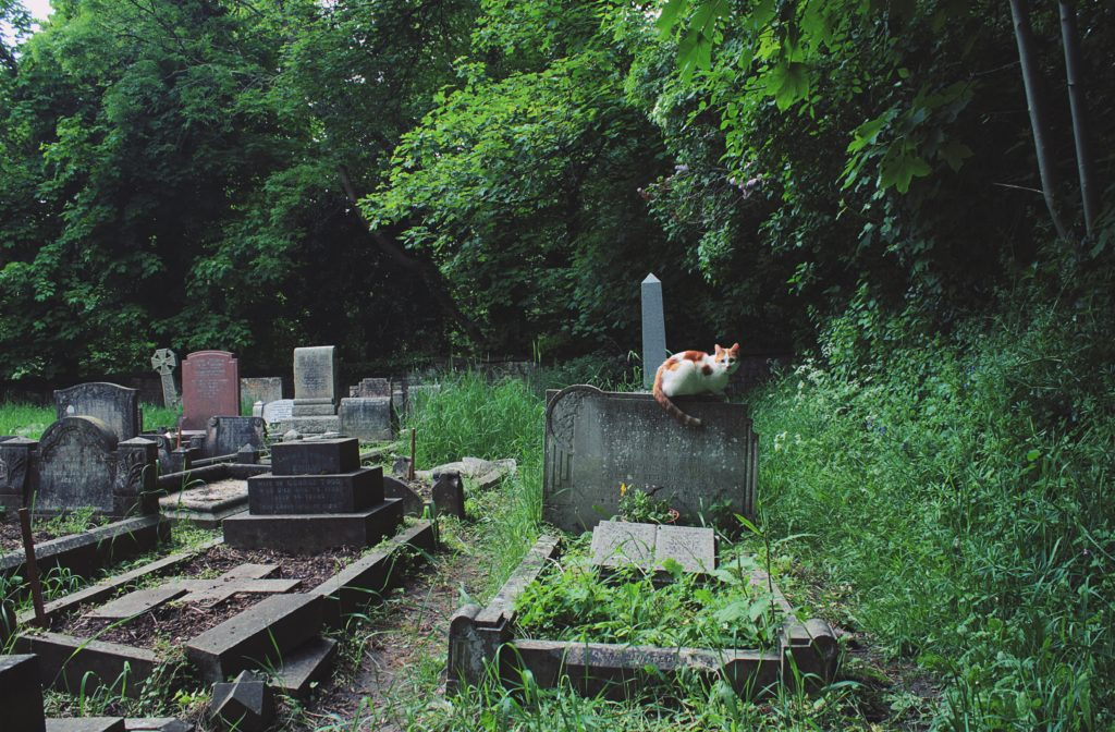Biaya pemakaman bisa mencapai jutaan. Padahal aturannya tak demikian - Rumah123.com