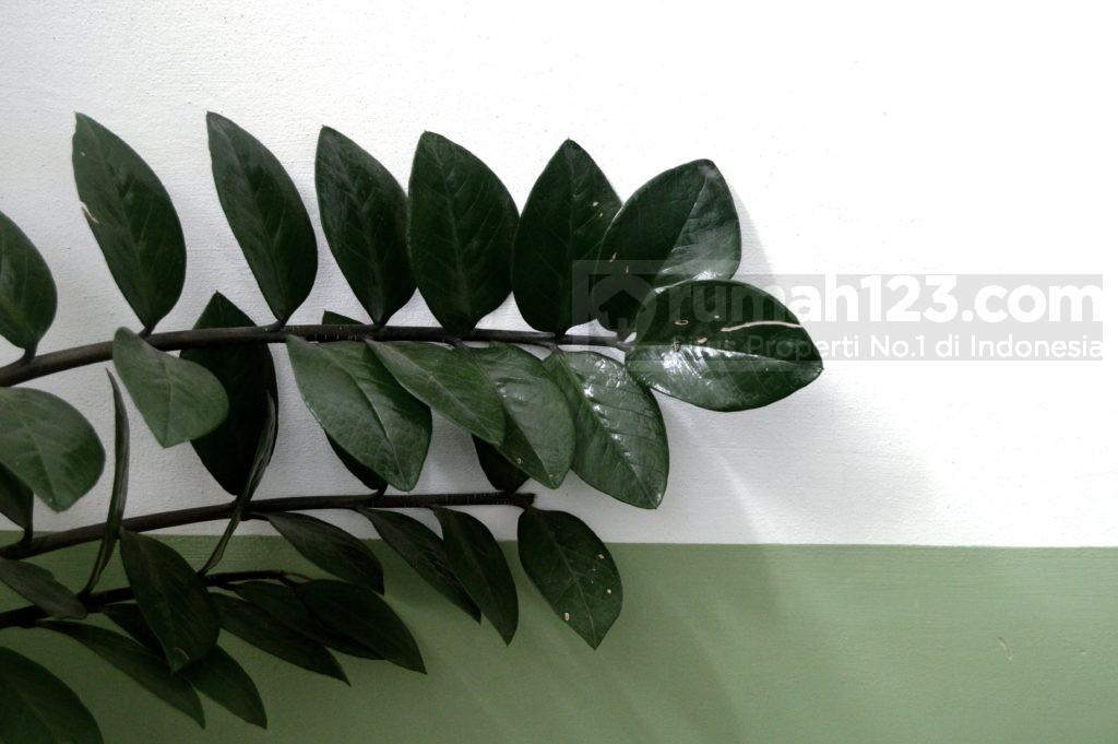 Tanaman hias daun dolar - Rumah123.com