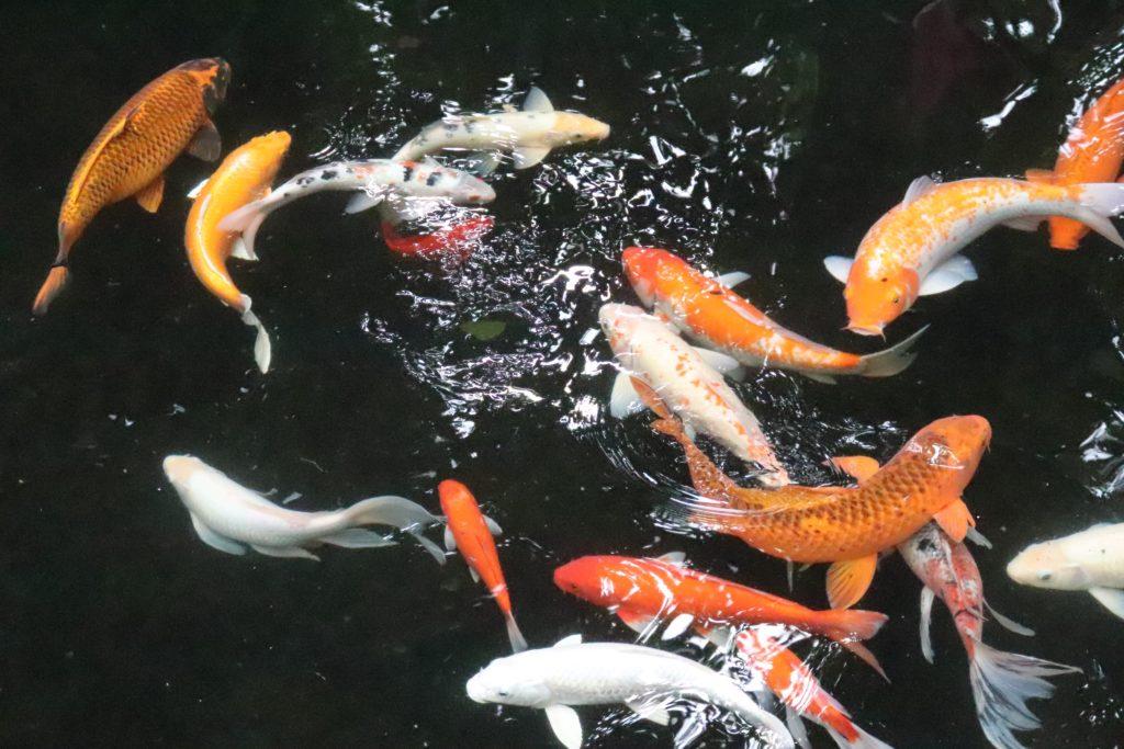 kolam ikan minimalis - Rumah123.com