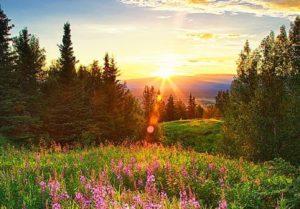 Manfaat Matahari untuk Kehidupan Manusia, Tumbuhan, Hewan, dan Alam