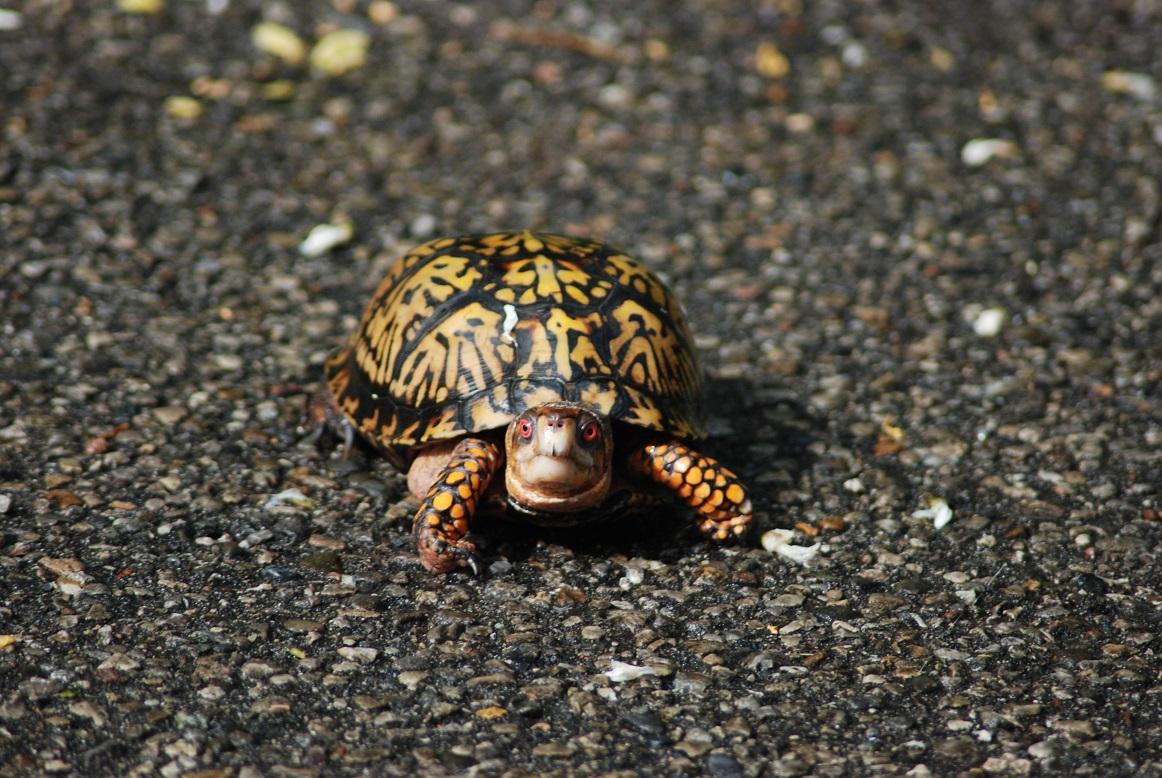 cara memelihara kura-kura