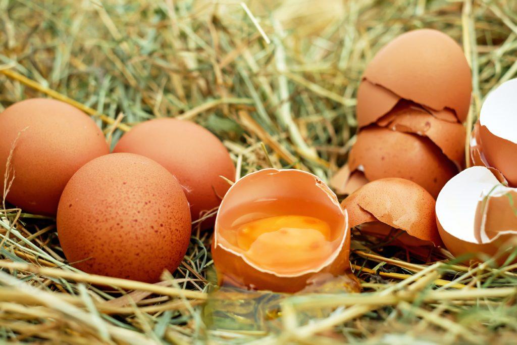 putih telur - rumah123.com
