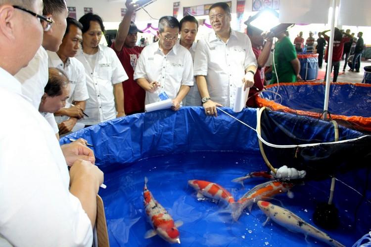 Ikan koi termahal