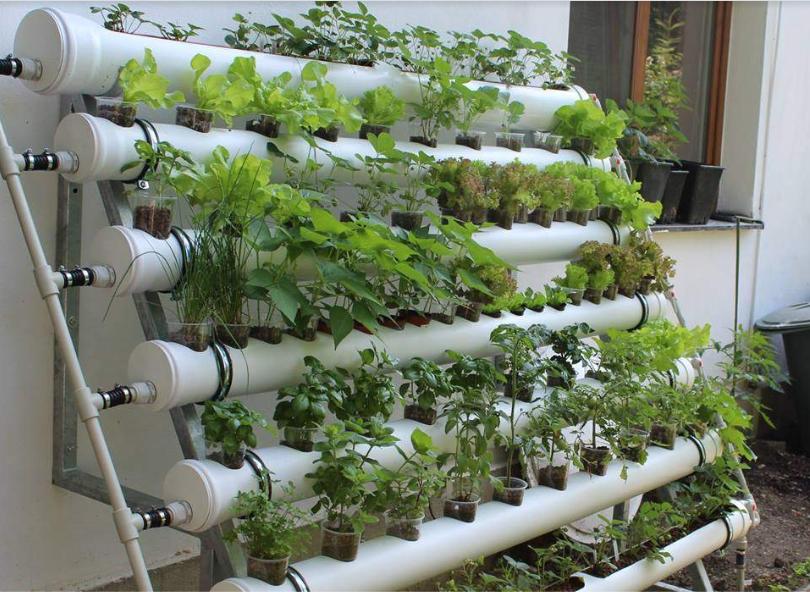 sayuran hidroponik