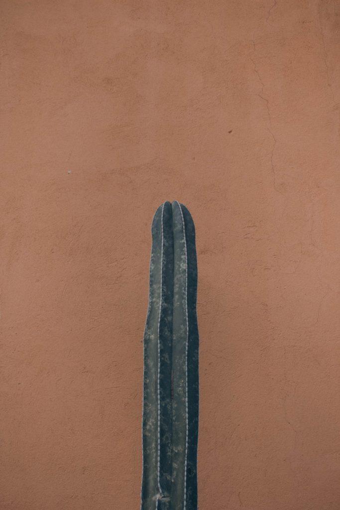 warna cat dinding coklat muda