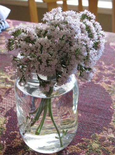 bunga valerian