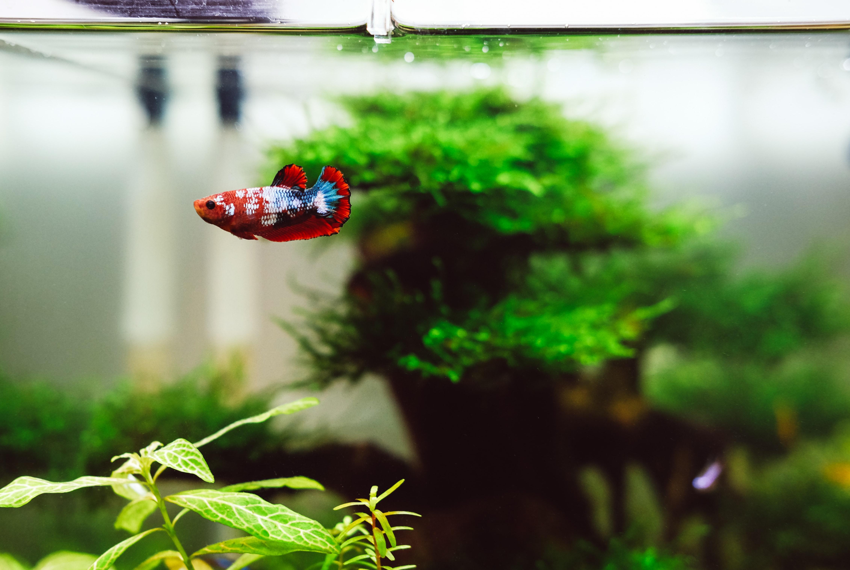 12 Jenis Ikan Aquascape Dengan Bentuk Dan Warna Terindah Rumah123 Com