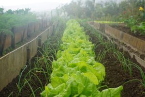 4 Langkah Praktis Membuat Kebun Sayur di Rumah untuk Pemula