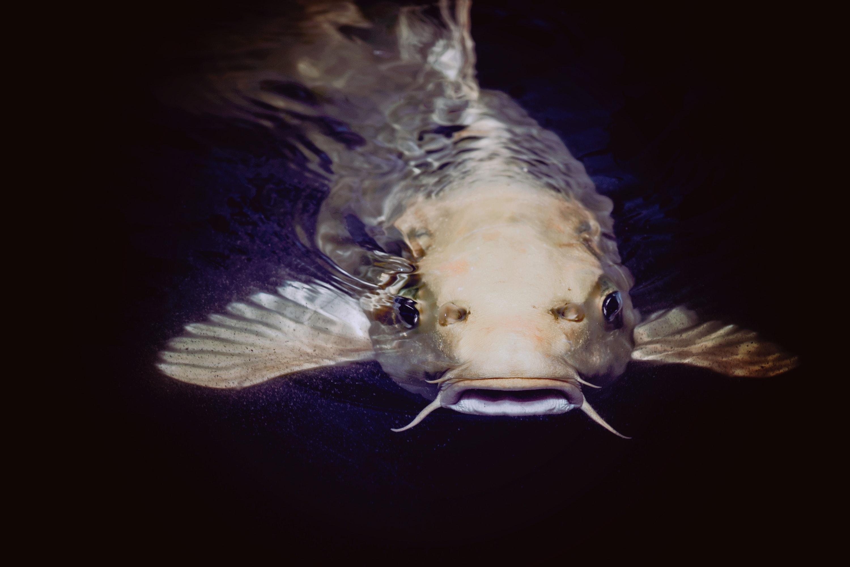 Cara Mudah Budidaya Ikan Lele di Rumah, Modal Minim Bisa Jadi Jutawan!