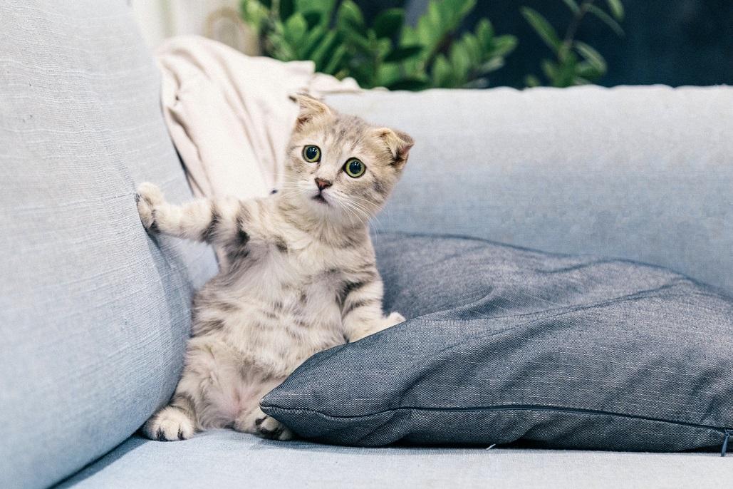 15 Cara Merawat Anak Kucing Tanpa Induk Simak Caranya Biar Tahu Rumah123 Com