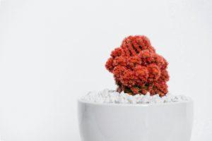 10 Jenis Tanaman Penyejuk Ruangan Murah dan Tanpa Tanah