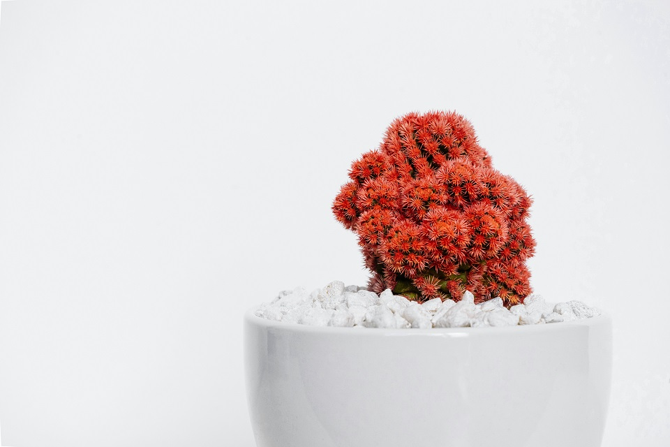 tanaman penyejuk ruangan murah dan tanpa tanah