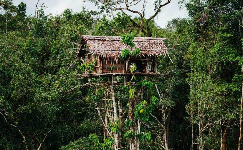 rumah adat papua korowai