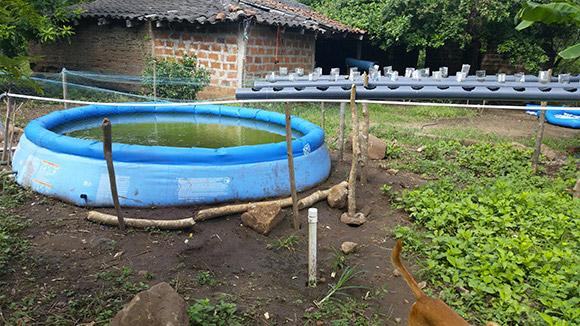 kolam terpal ikan mujair