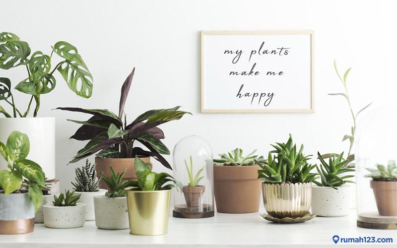 9 Inspirasi Pot Bunga Unik Yang Cocok Untuk Berbagai Tanaman Di Rumah Rumah123 Com