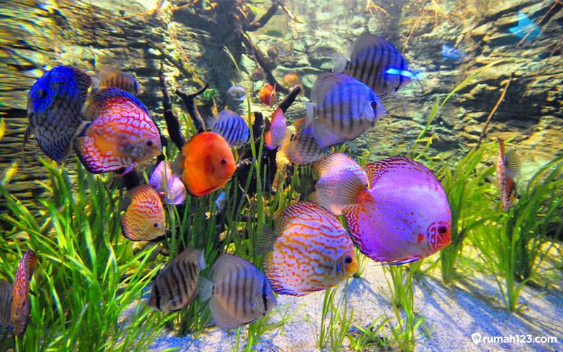 ikan discuss
