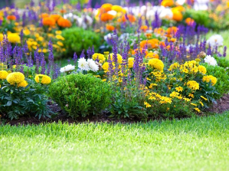 9 Jenis Tanaman untuk Taman Depan Rumah, Banyak Pilihannya Lho