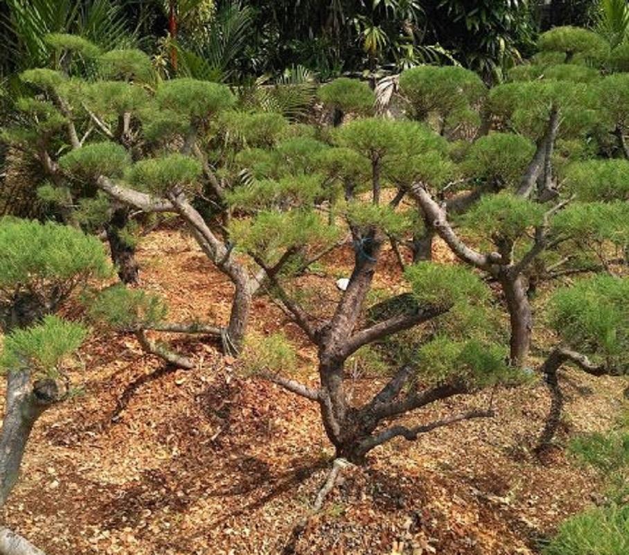 jenis tanaman untuk taman depan rumah