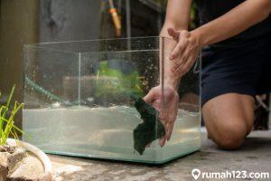 Cara Membersihkan Kaca Aquarium, Mudah, Praktis, dan Auto Bening!