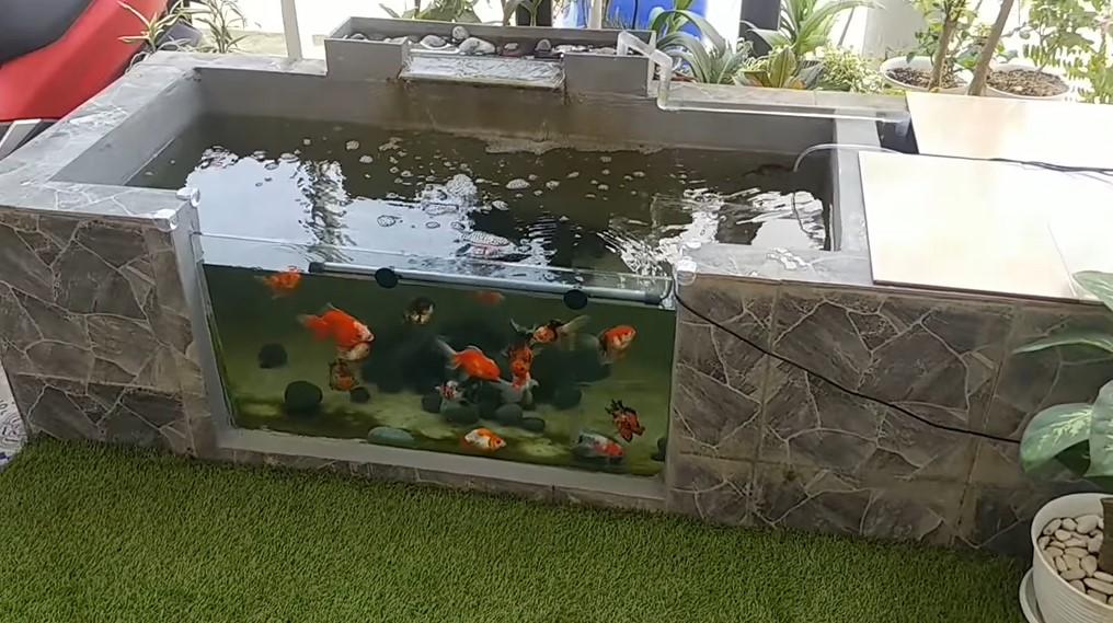 Modal Rp800 Ribuan Bikin Kolam Ikan Minimalis Hasilnya Mewah Rumah123 Com
