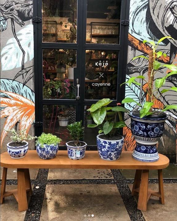 tanaman hias murah