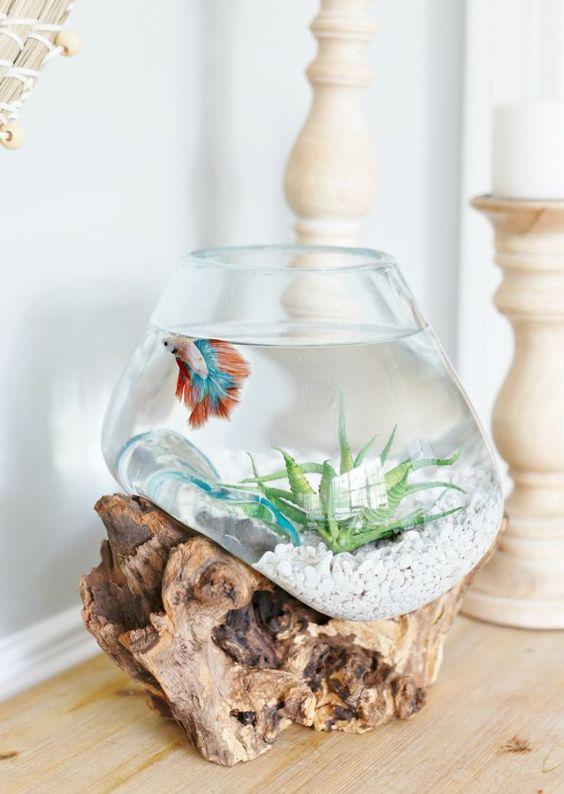 aquarium mini