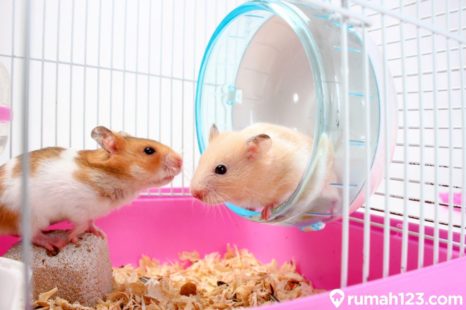 8 Rekomendasi Pilihan Kandang Hamster Terbaik di Rumah yang Bisa Kamu Beli  | Rumah123.com