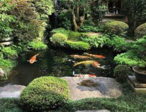 17 Inspirasi Kolam Ikan Depan Rumah | Mau Kolam Minimalis atau Desain Jepang?