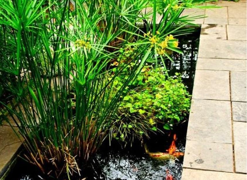 kolam ikan depan rumah