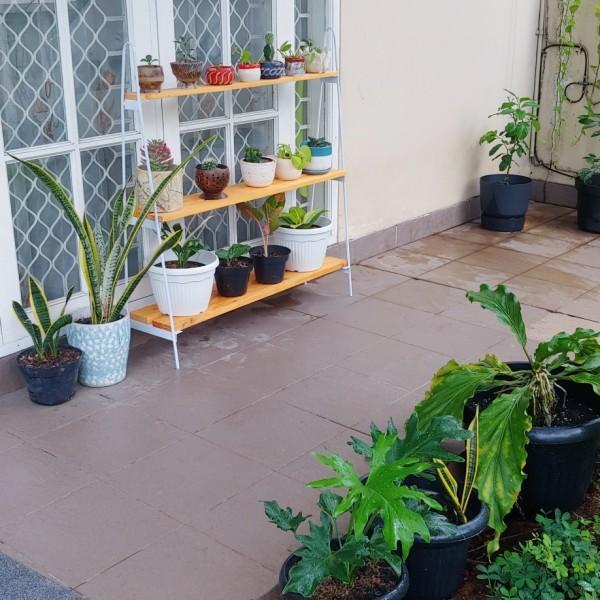 rak tanaman