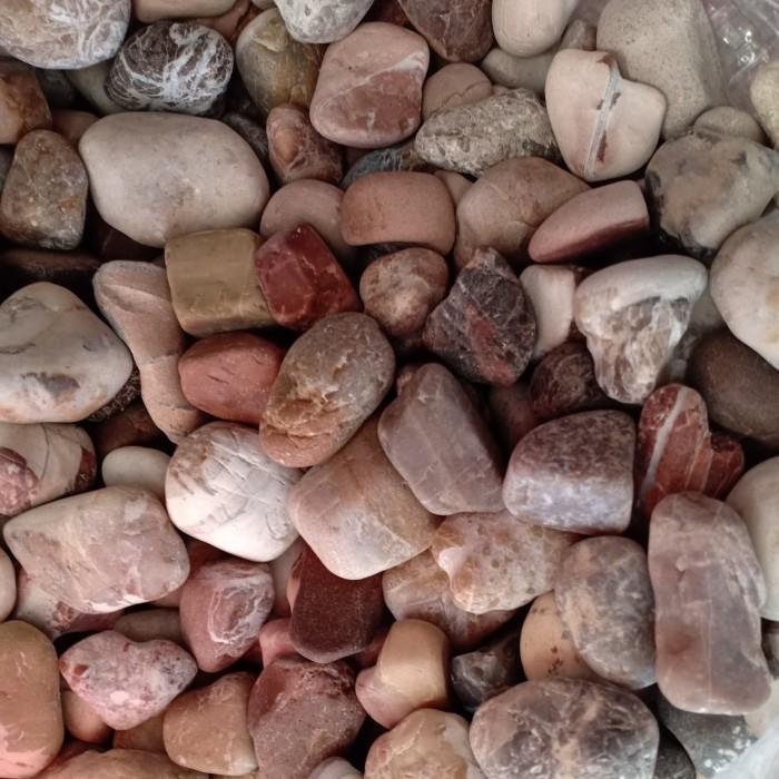 batu koral merah hati jumbo