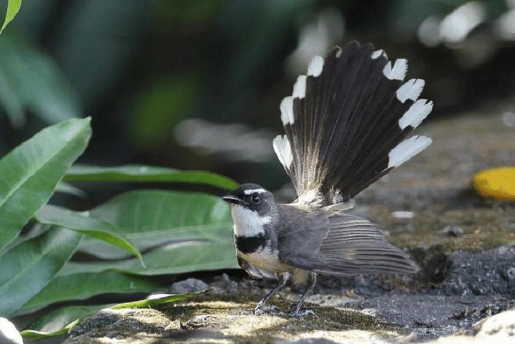 burung pemakan serangga