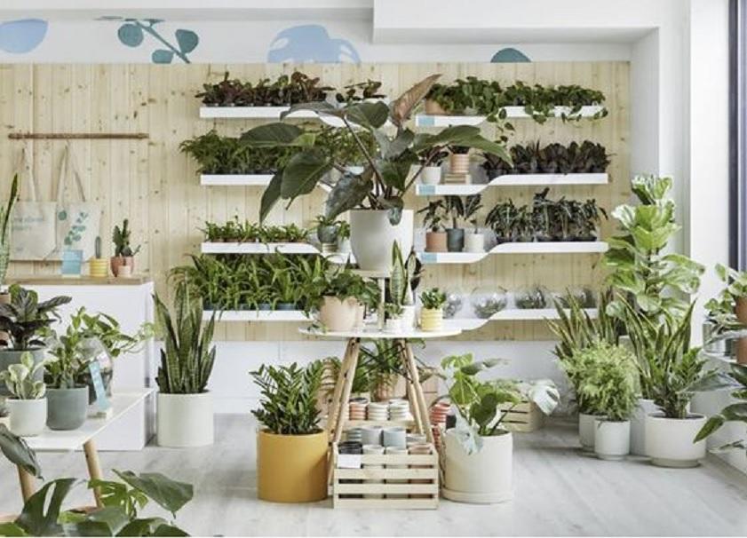 rak tanaman hias