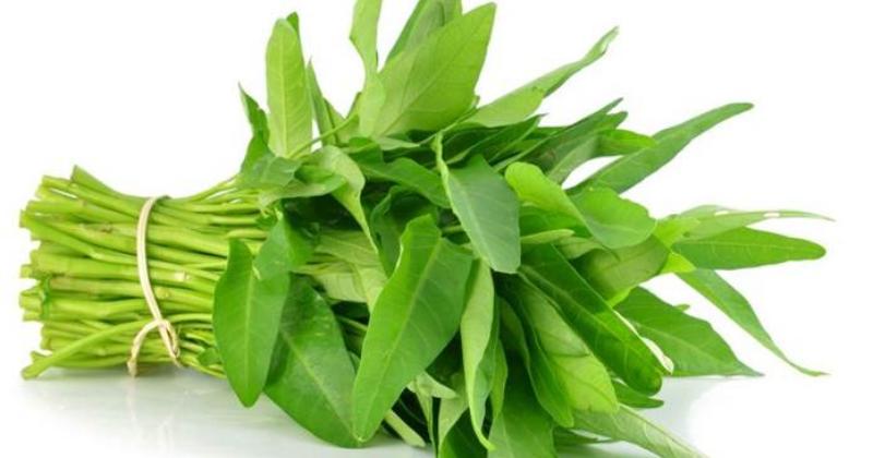 tanaman kangkung