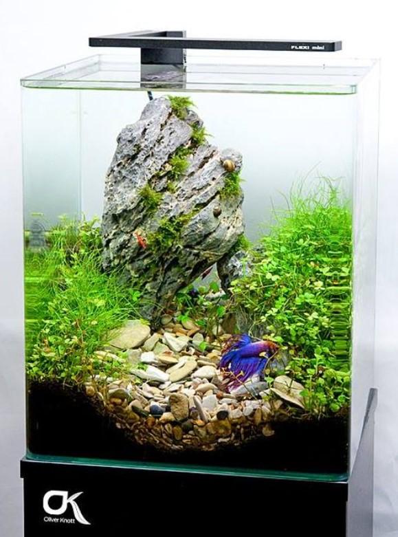 12 Desain Aquarium Minimalis Yang Estetis Dan Anti Makan Tempat Rumah123 Com
