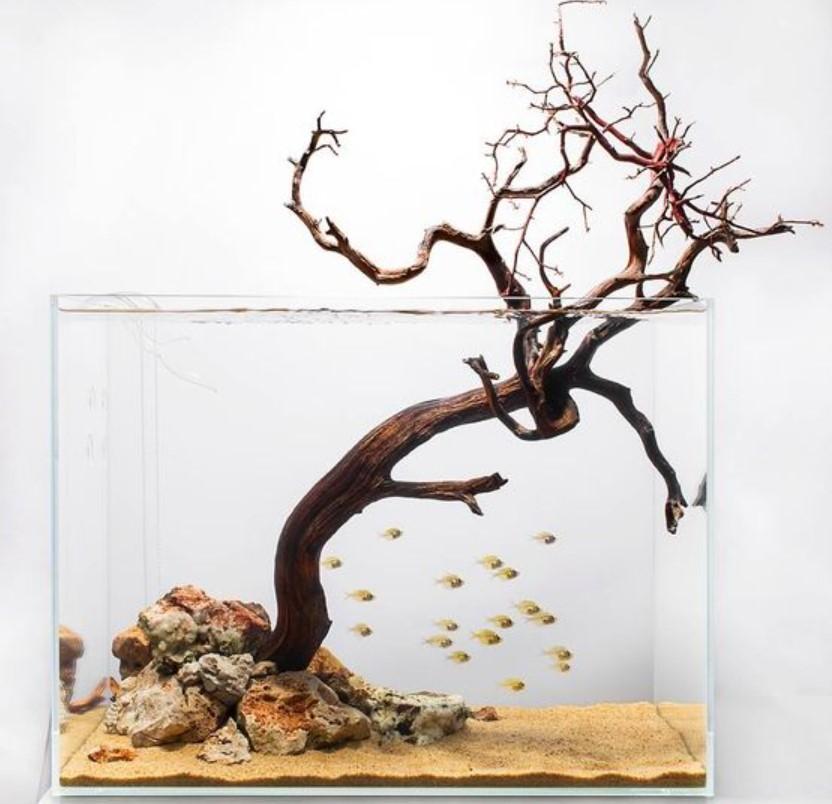 aquarium minimalis