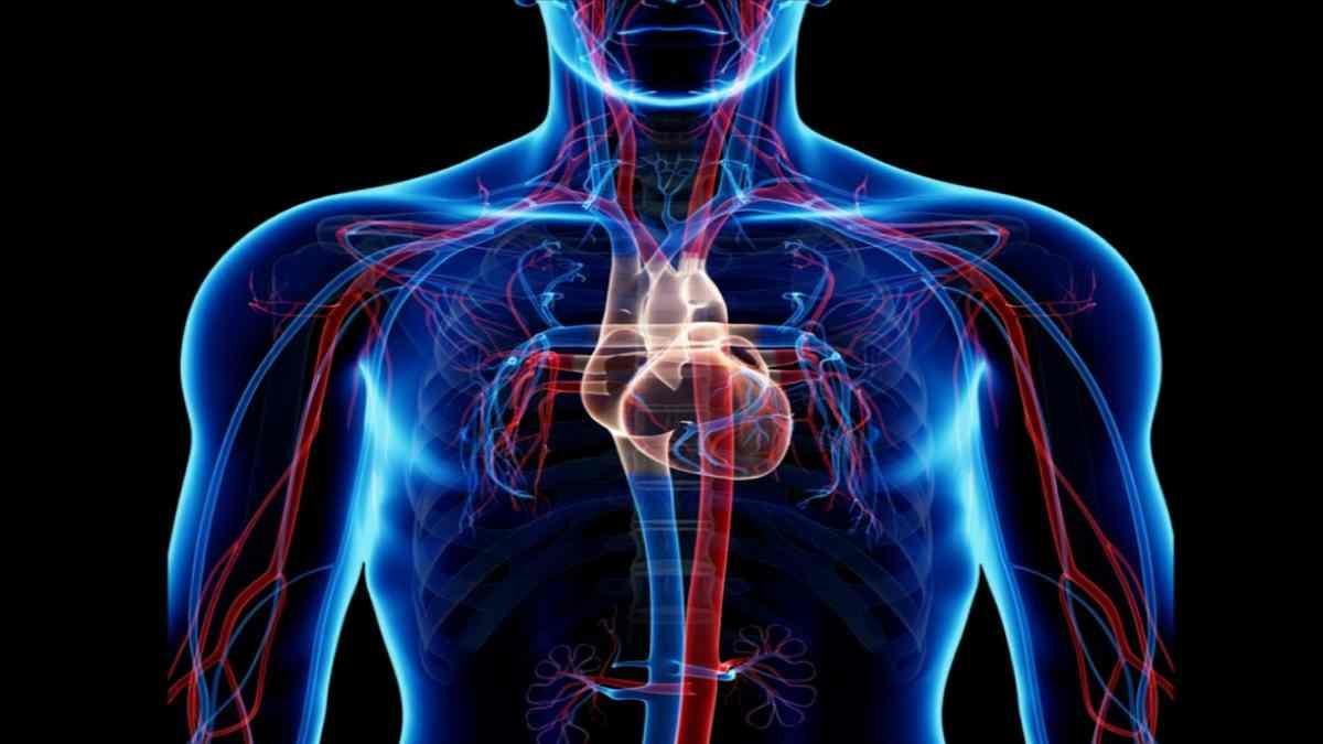 aliran darah tubuh
