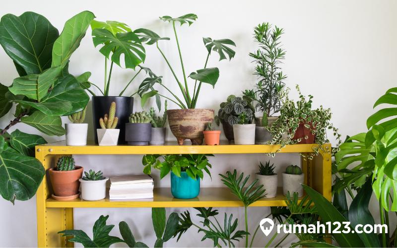 rak tanaman minimalis