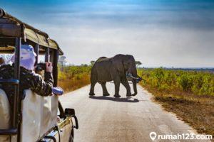 10 Negara di Afrika Terbaik untuk Berwisata Pasca Pandemi