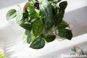 8 Tanaman Hias Ini Bikin Kualitas Udara di Rumah Lebih Baik